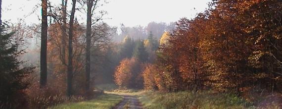 Waldweg im Solling