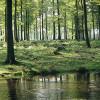 Sollinglandschaft: Wald und Bach